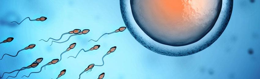 sperm-count-men